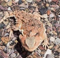off grid lizard 20140420_115417