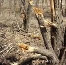 Tree carnage