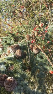 Rose hips and pine cones